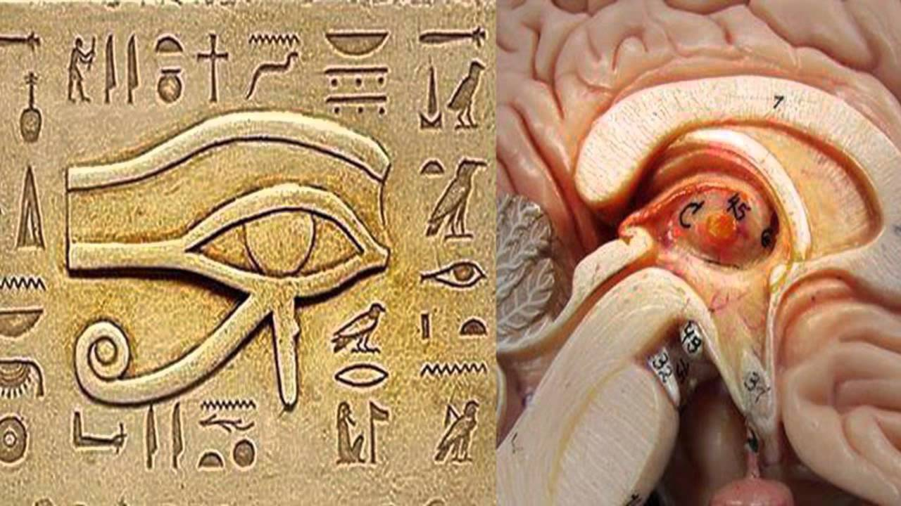Pineal Gland (3rd Eye) – Biggest Secret Hidden from Humanity